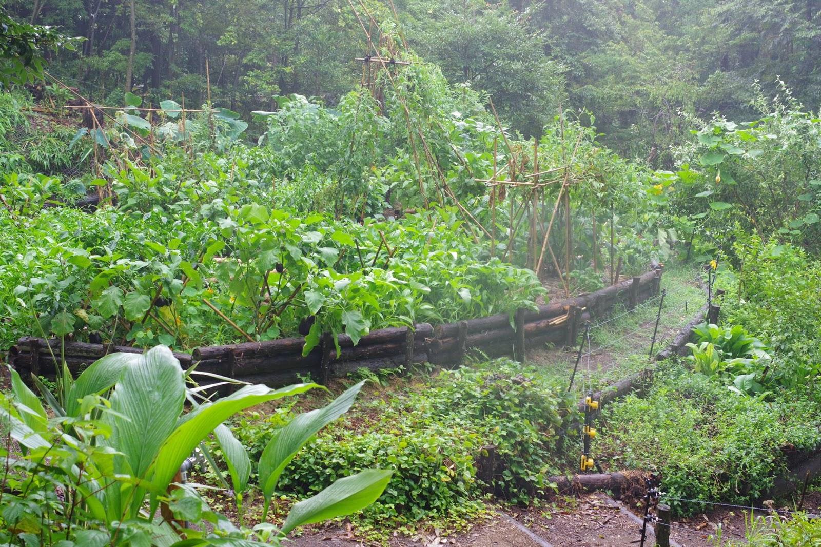 百姓 Hyakusho: Stonebridge Permaculture Forest Garden
