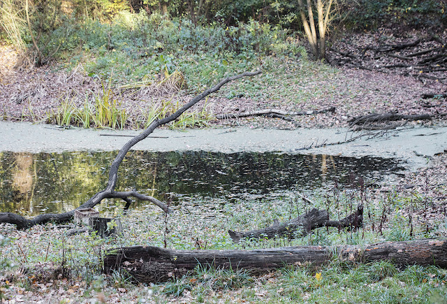 Logs and pond on Hayes Common, 18 November 2016.