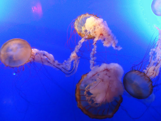 jelly fishes at Ocean Park Hong kong