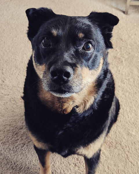 image of Zelda the Black and Tan Mutt sitting on the floor in front of me, looking up at me with an adorable expression