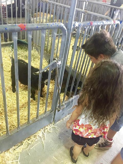 sacramento county fair, sac county fair, california state fair, cal expo fair, sacramento events,