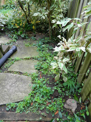 Toronto Fall Cleanup Before in a Riverdale backyard by Paul Jung Gardening Services--a Toronto Organic Gardening Company