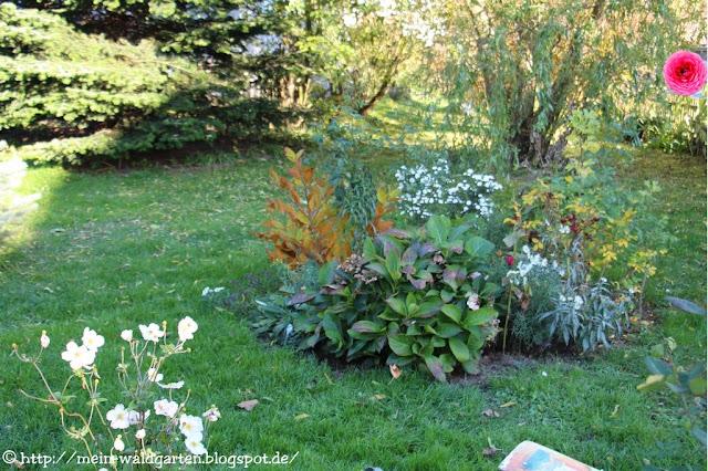 mein waldgarten bienen im november am lavendel. Black Bedroom Furniture Sets. Home Design Ideas