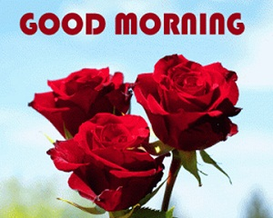 Romantic Good Morning Red Rose Image