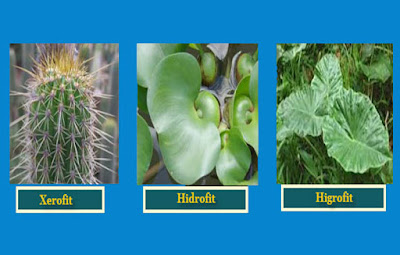 14 Contoh Adaptasi Morfologi Pada Tumbuhan