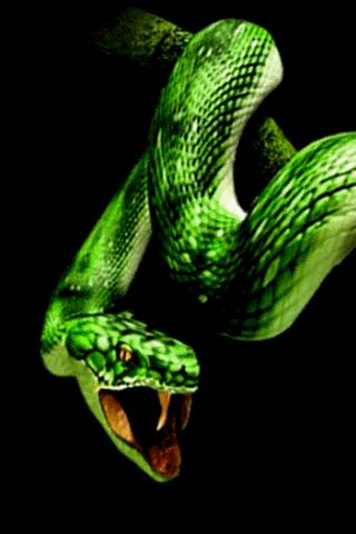 3d Animated Wallpapers For Windows 7 Snakes Snakes Wallpapers Hd
