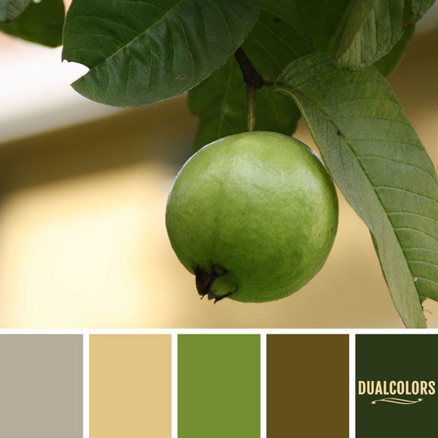 color_paleta_147
