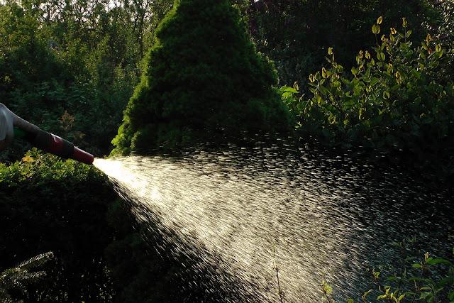 Jak i kiedy nawadniać rośliny po posadzeniu?