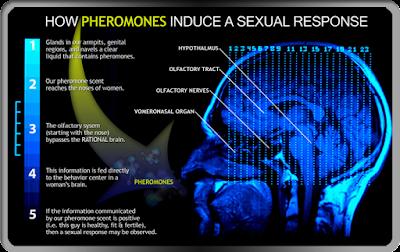 Cara kerja parfum pheromone original