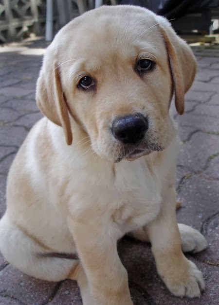 Image result for puppy face pictures