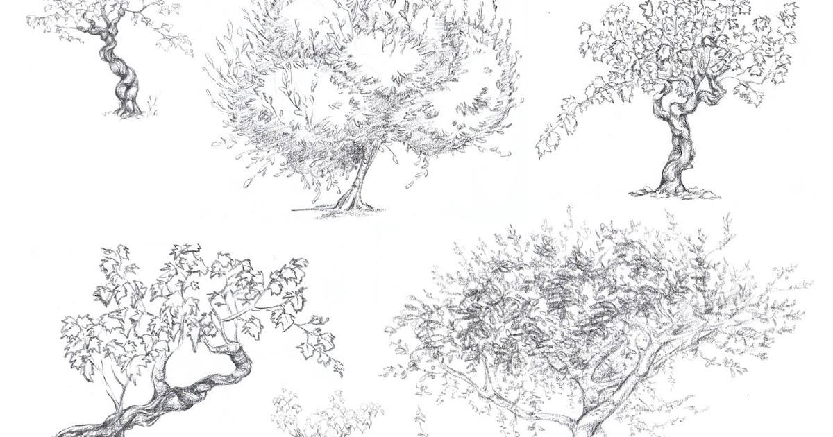 Estelle Colin: Croquis d'arbres
