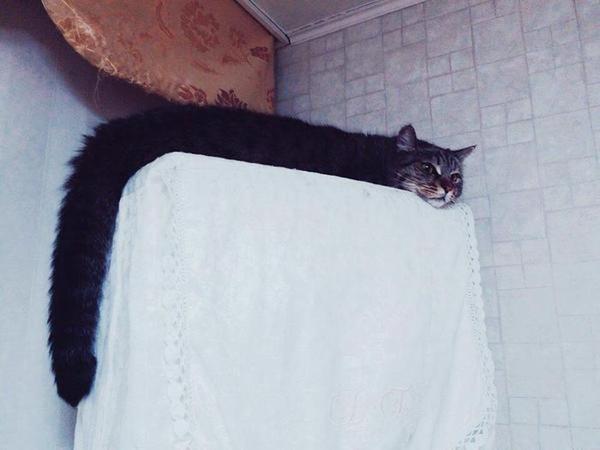 смешной кот лежит как змея