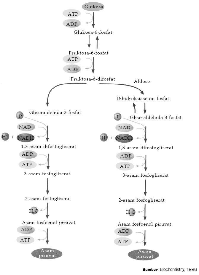 Soal pembahasan enzim dan metabolisme
