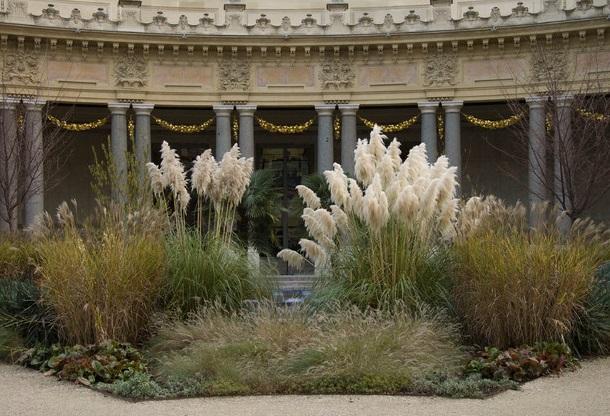 Пампасная трава и другие злаки