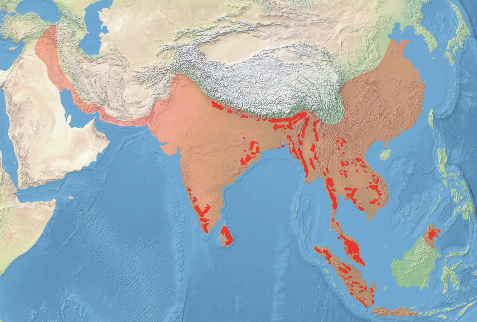 Modern (red) and Historical (pink) range of the Asian elephant