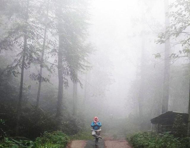 Hutan Pinus Cipamingkis