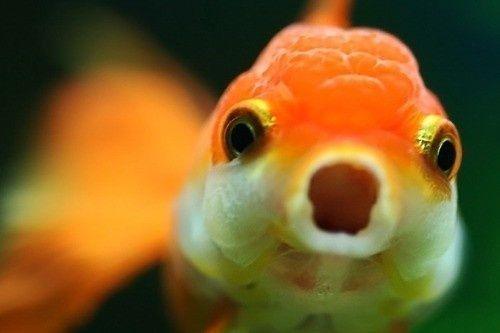 Gambar Ikan Lucu