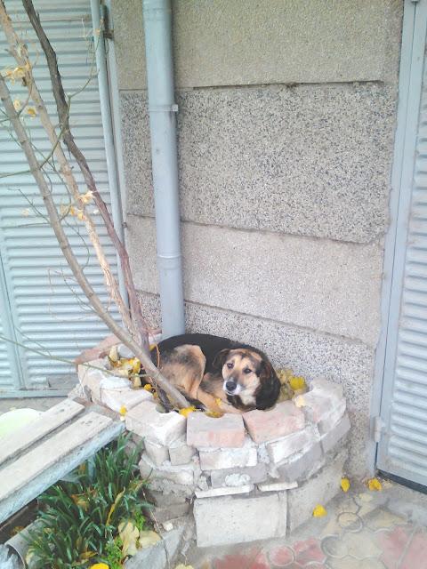 Cosy Bed, Yambol, Ямбол, Dog