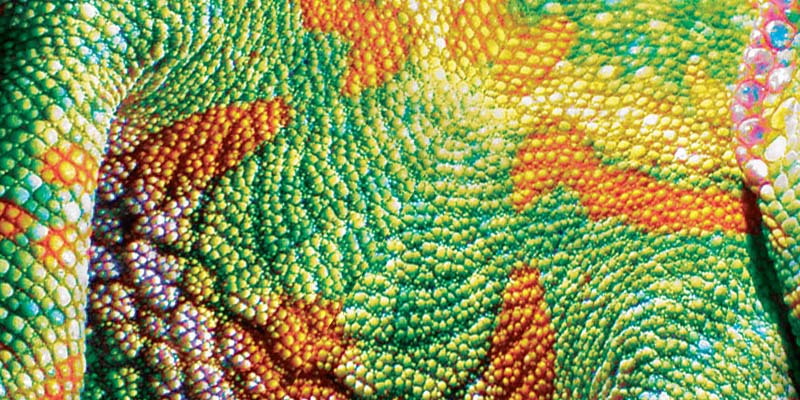 Cover for Ansia's Agapes kai Paralirimata of Chameleon, 2008, by Kostas Gogas showing the colorful green and orange skin of a chameleon.
