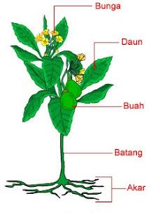 bagian-bagian tumbuhan