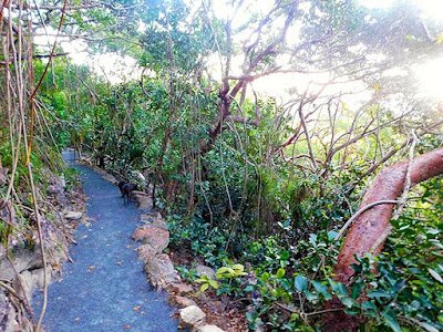 sky trail, nature trails, nature, magic of paya, beauty, facilities, paya bay resort,