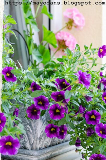 Fensterkästen mit Sommerblumen