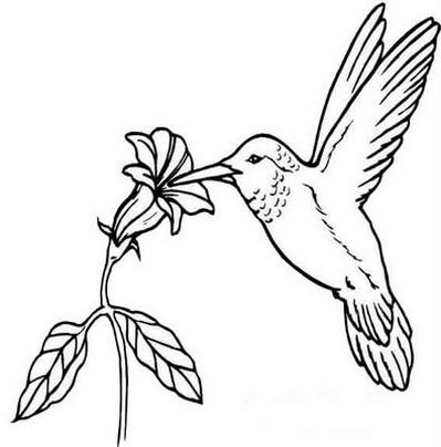 beija flores 25 desenhos para colorir imprimir 05 de outubro dia