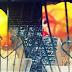 Pellet / Voer Sebagai Pakan Lovebird.