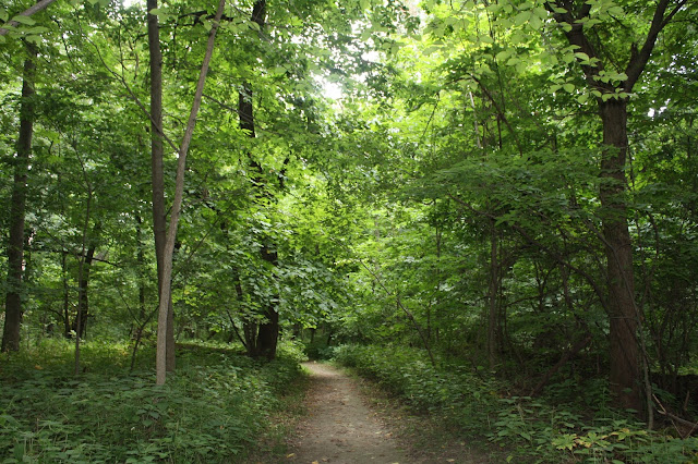 Lovely wooded path at Black Hawk State Historic Site