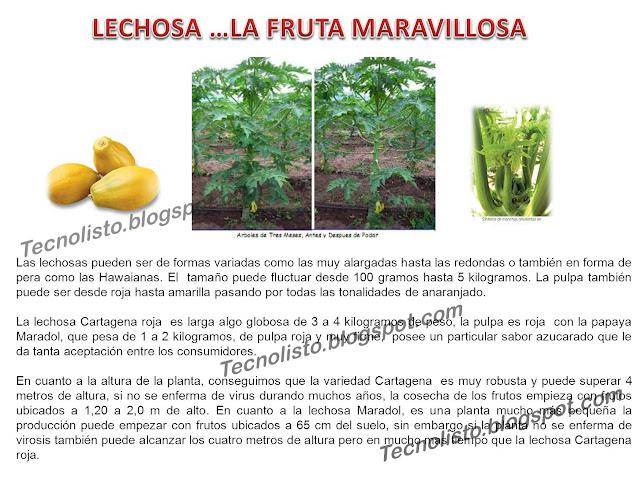 """Manual de Cultivo Siembra de lechosa2"""