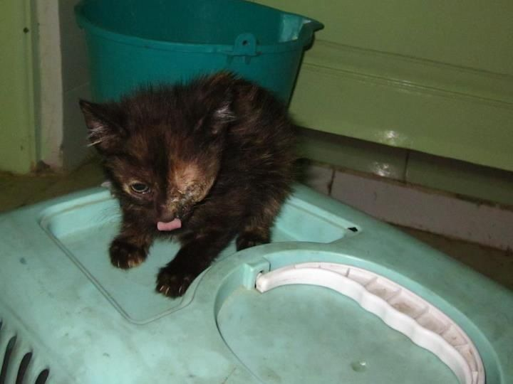 Cat Poisined By Dig Flea Medicine