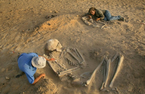Archaeologists-uncovering-a-Giant-skeleton-at-a-dig-site.