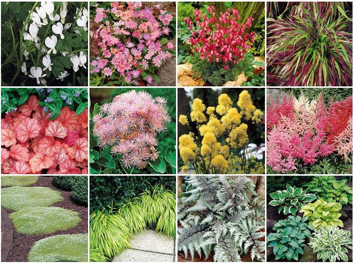 Garden Dream List Of Fabulous Shade Flowers