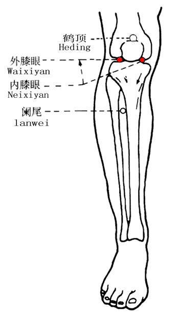 膝眼穴位 | 膝眼穴痛位置 - 穴道按摩經絡圖解 | Source:zhongyibaike.com