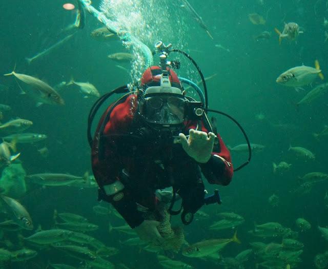 Das Nordsee-Ozeanarium in Hirtshals: Ein tolles Ausflugsziel für Familien in Nord-Jütland. in dem riesigen Aquarium wird der Mondfisch von einem Taucher aus der Hand gefüttert.