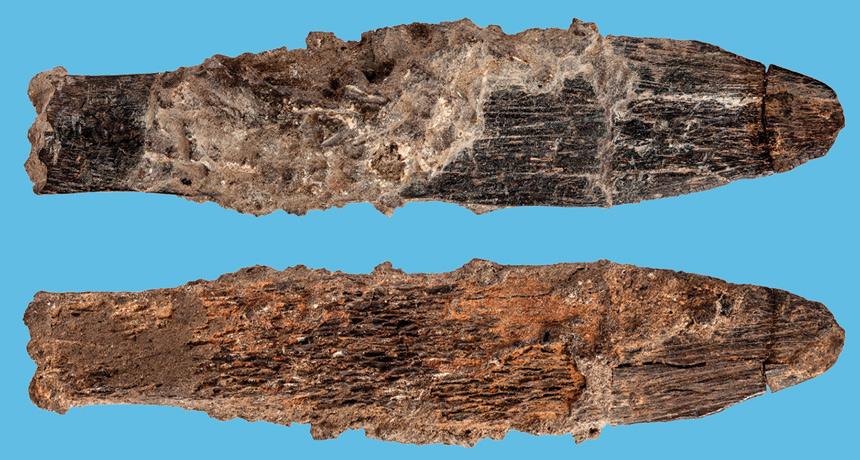 Cuchillo de hueso de 90.000 años recuperado en la cueva de Dar es-Soltan (Marruecos). Foto: TRUSTEES OF THE NATURAL HISTORY MUSEUM, LONDON (2018), S. BELLO AND MOHAMMED KAMAL (FOTOKAM, MOROCCO)