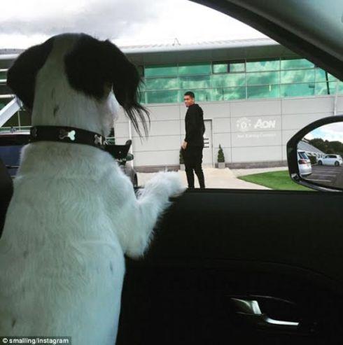 Chris Smalling S Dog Nicknamed Most Pampered Dog Accompanies Him