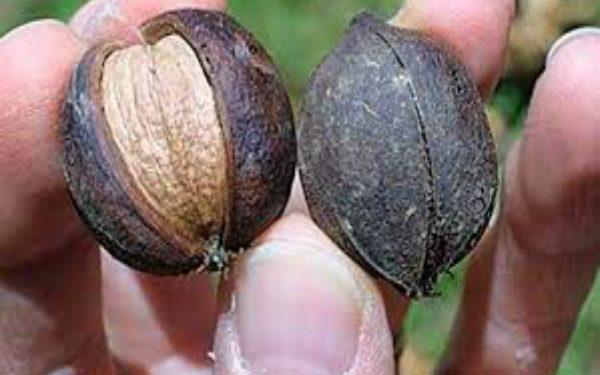 benefits of nuts Cholesterol Cardiovascular  Food
