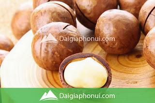 HẠT QUẢ MẮC CA - MACCA - MACADAMIA NUTS
