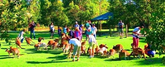 Caversham Wildlife Park Tempat menarik di Perth Australia
