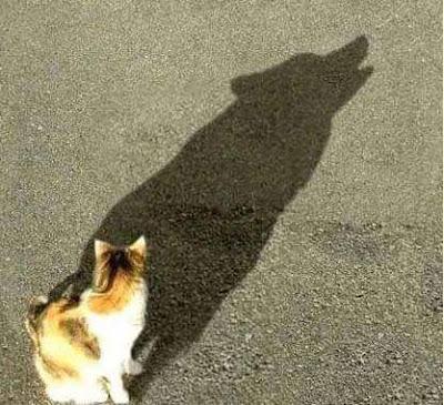 Seekor Kucing - Sekitar Dunia Unik