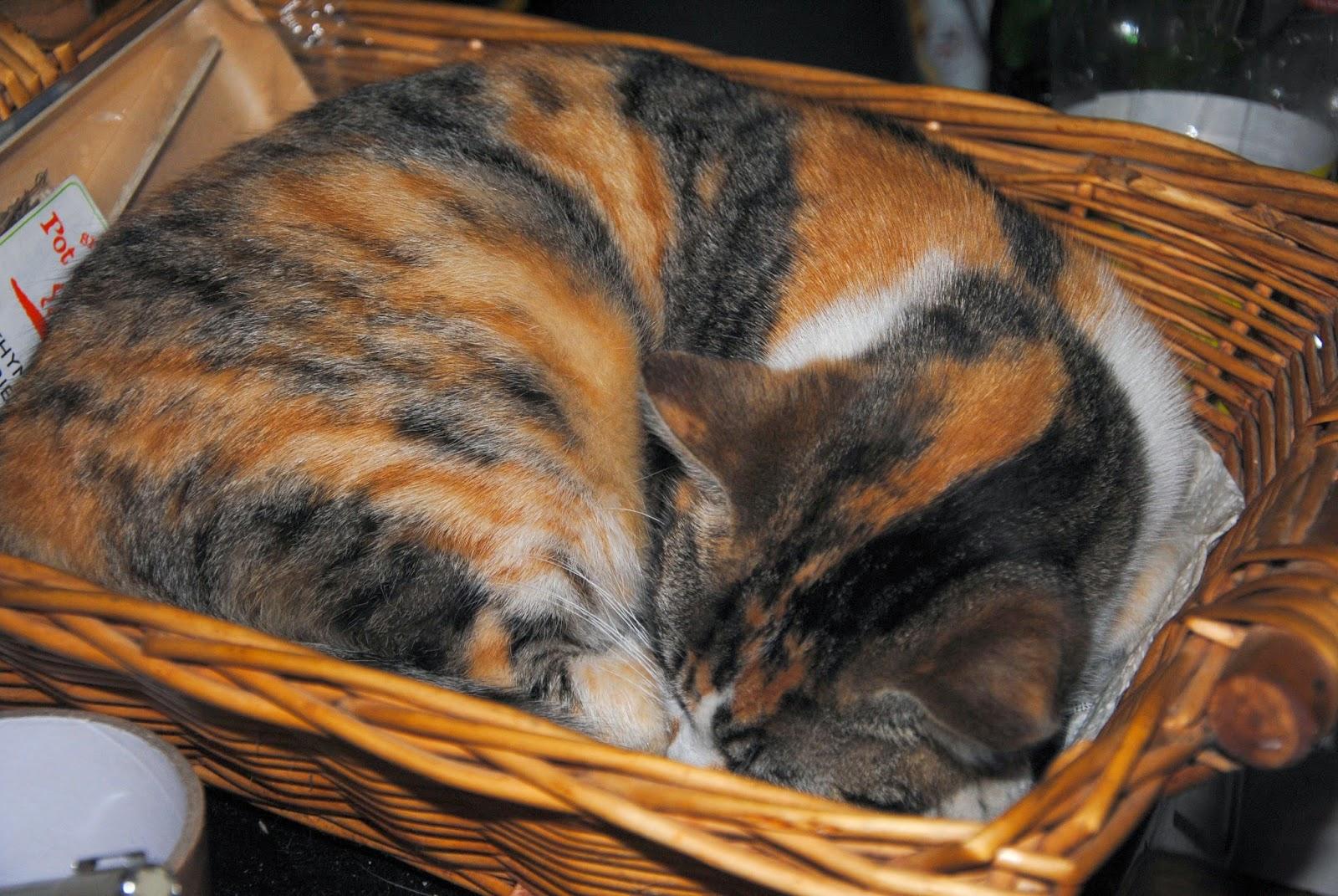 chat mignon qui dort