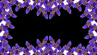 11 Moldura flor roxa png