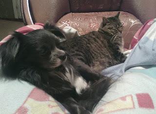 друзья пес и кот