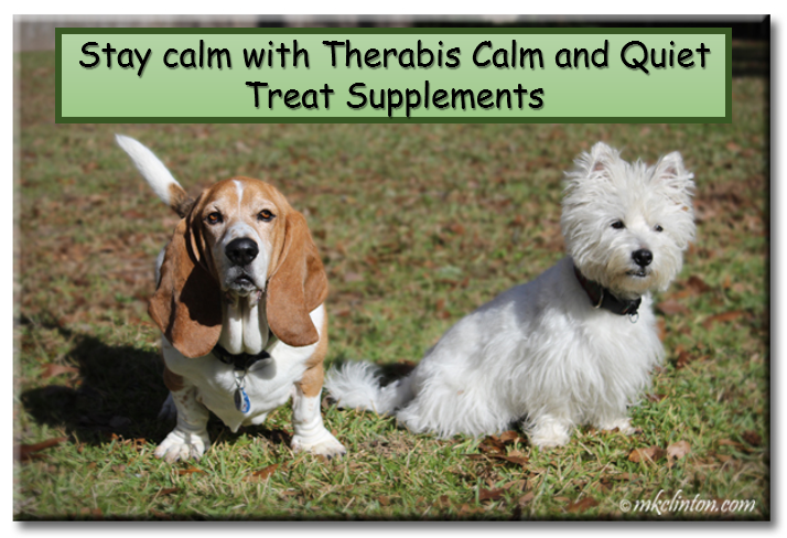 Stay calm with Therabis featuring Basset hound and Westie