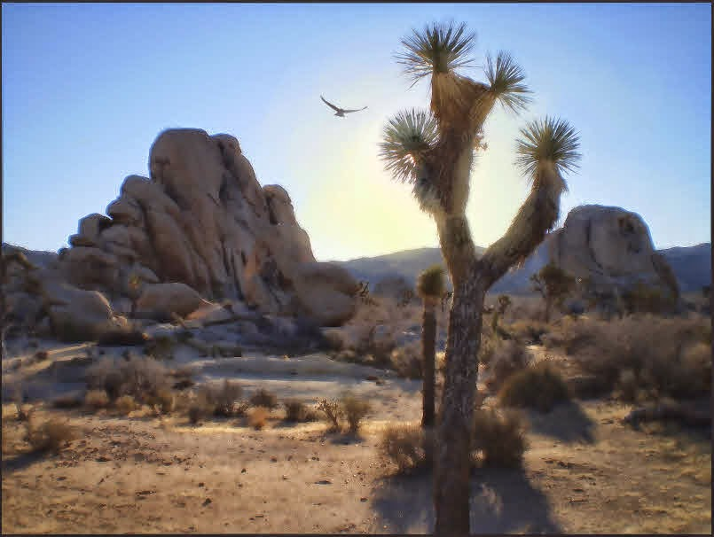 dawn,sunrise,Joshua Tree National Park, hawk,Joshua tree,monzogranite, rocks,boulders,sun