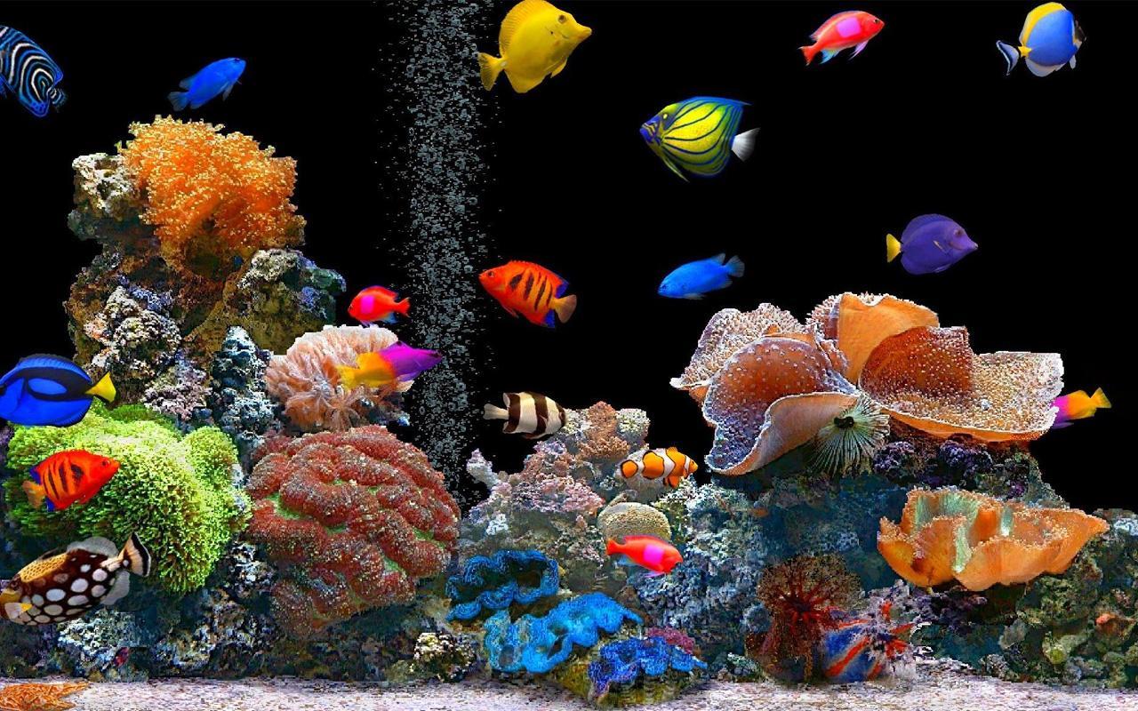 Fond d 39 cran poisson anim fonds d 39 cran hd for Fond ecran aquarium