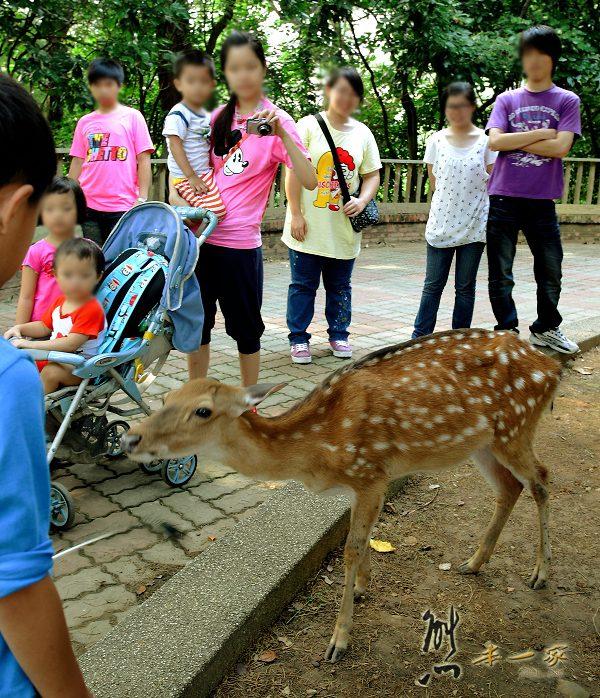 新竹親子遊|新竹市立動物園~有日本奈良賞鹿的Fu