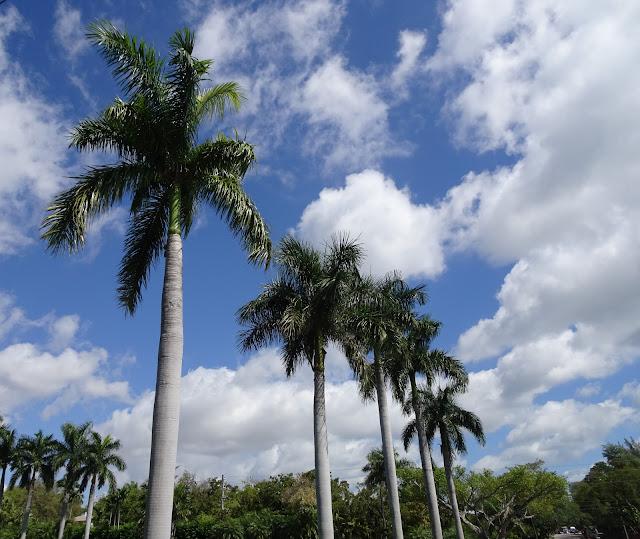Miami está lleno de palmeras por todos lados.