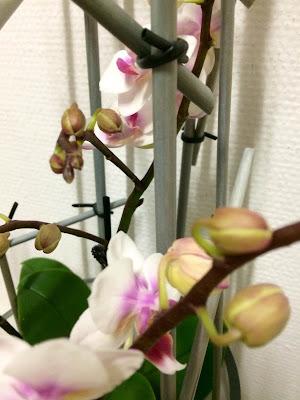 styling af planter diy